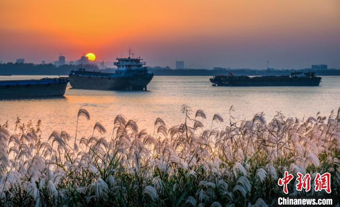 """泰州打造""""春江花月夜""""湿地公园,加快岸线生态修复。高港区供图"""