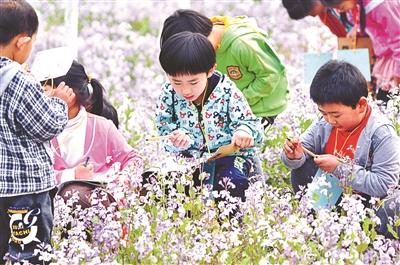 南独乐河幼儿园的孩子在田间体验自然乐趣