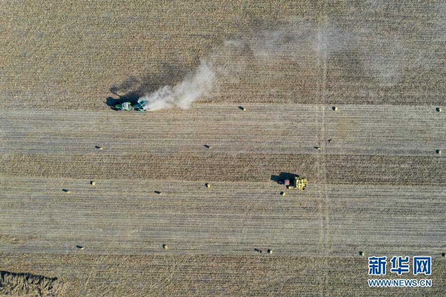 11月5日,在吉林省松原市宁江区善友镇团结村,农民驾驶秸秆粉碎打包机处理秸秆(无人机照片)。