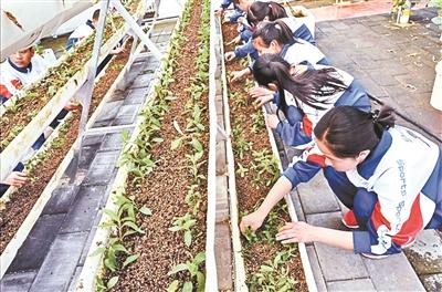 怀柔庙城学校学生在农业科技种植园照料幼苗