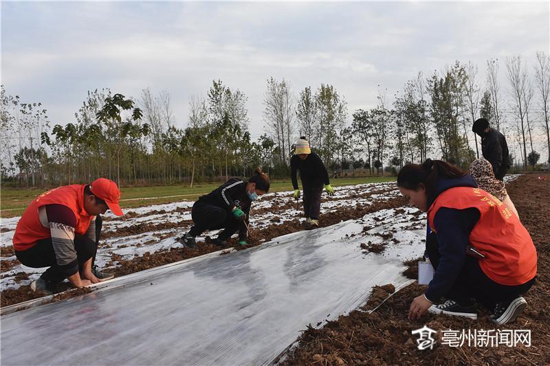 亳州:发展种植中草药产业 助力农村脱贫致富