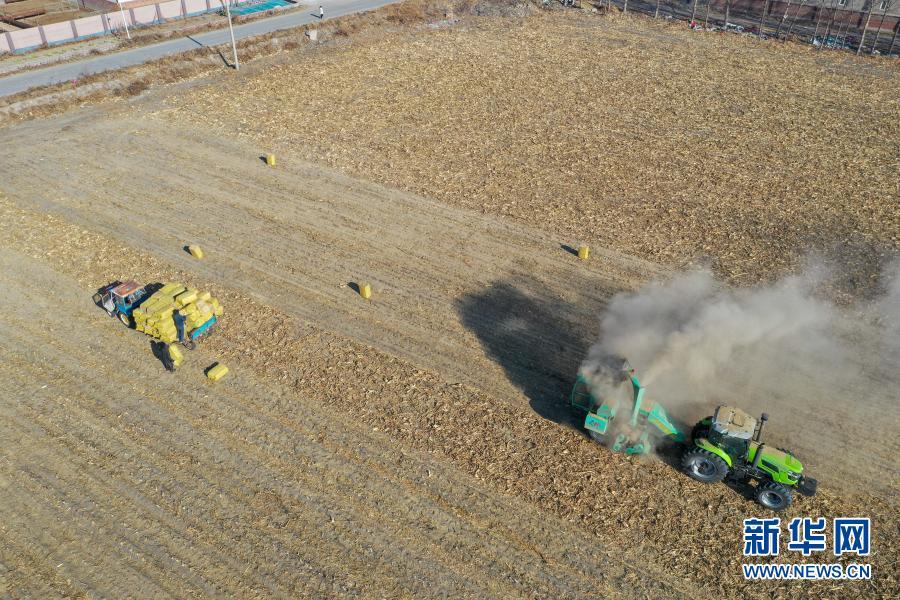 11月5日,在吉林省松原市宁江区善友镇团结村,农民在秋收后的农田上处理秸秆(无人机照片)。新华社记者 张楠 摄