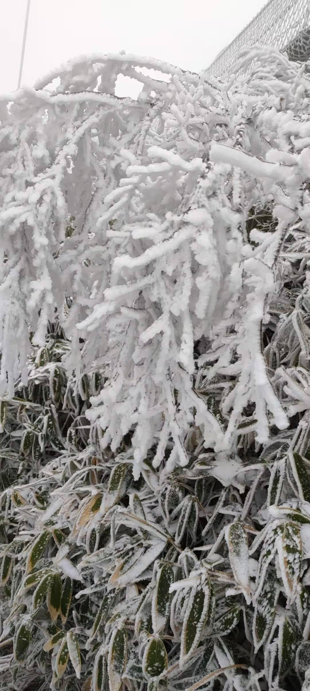 """太美啦!2020年""""小雪""""巧遇达州首场降雪天"""