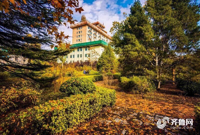 山师校园里的落叶季,随便一拍就是你喜欢的样子