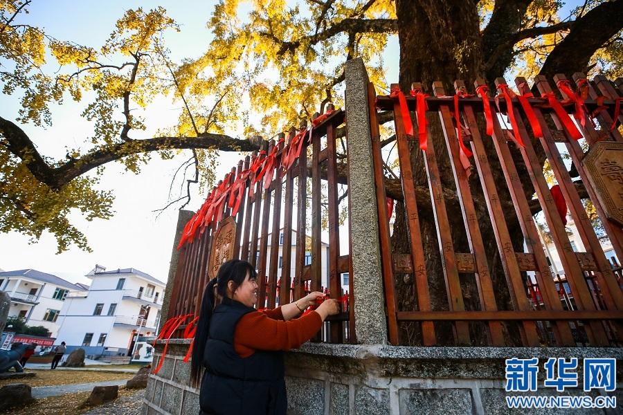 游客在银杏树下系上红丝带。新华网发 王迪川 摄