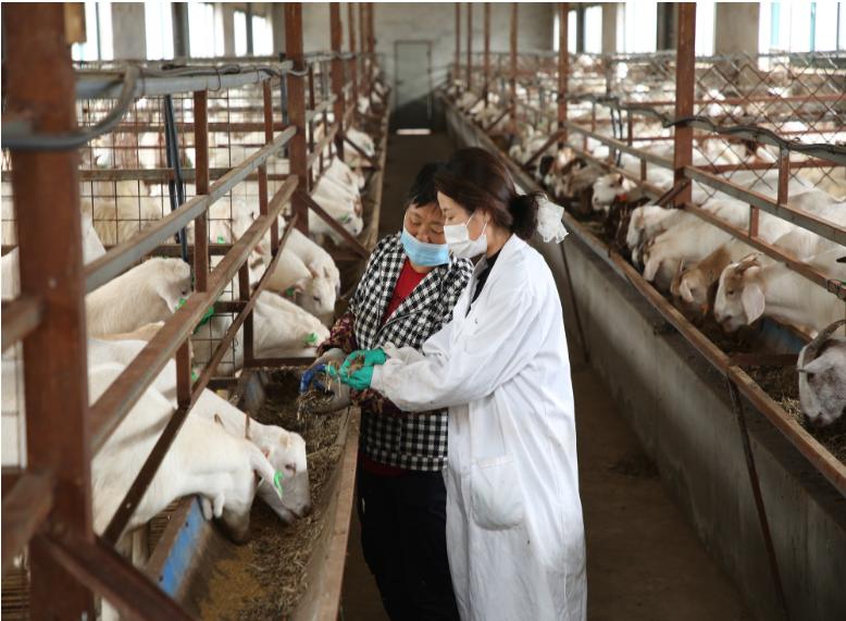 铜陵义安区:特色养殖促农增收