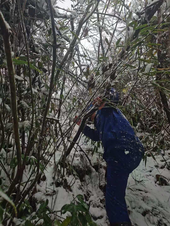 突降大雪致5000余户用户断电 国网万源市供电公司全力抢修复电