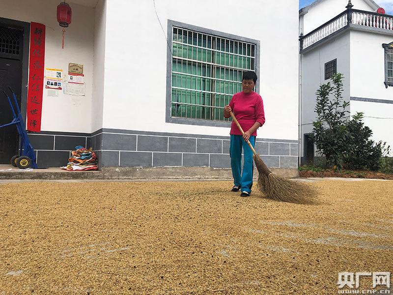 村民在家门前晾晒稻谷(央广网记者 胡斐 摄)