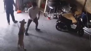 狗子被拴住遭男子百般戏耍 越想越气下一秒挣脱绳索报复