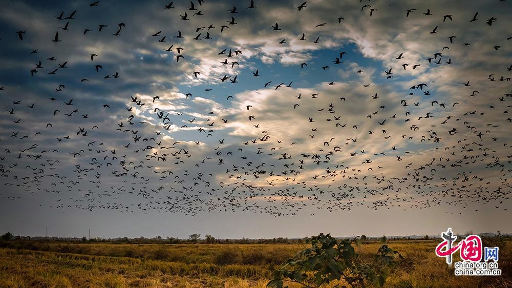 如今,通过一系列的综合治理,吴城特色候鸟小镇维护了生物的多样性,也为长江经济带的建设起到了示范作用。图为永修县吴城镇湿地风光。永修县委宣传部供图