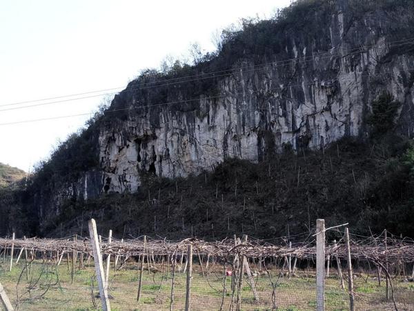 普安镇葡萄种植基地