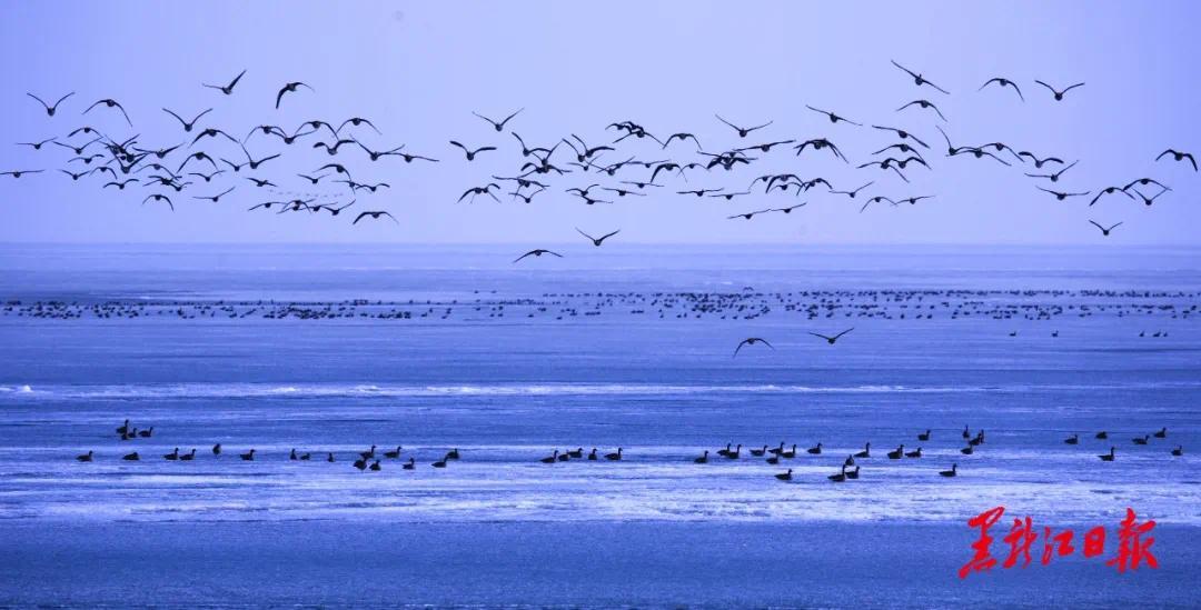 兴凯湖冰雪景观 省摄影家协会提供