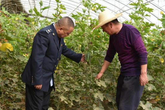 税务干部到吉瑞农牧专业合作社了解蔬菜销售情况