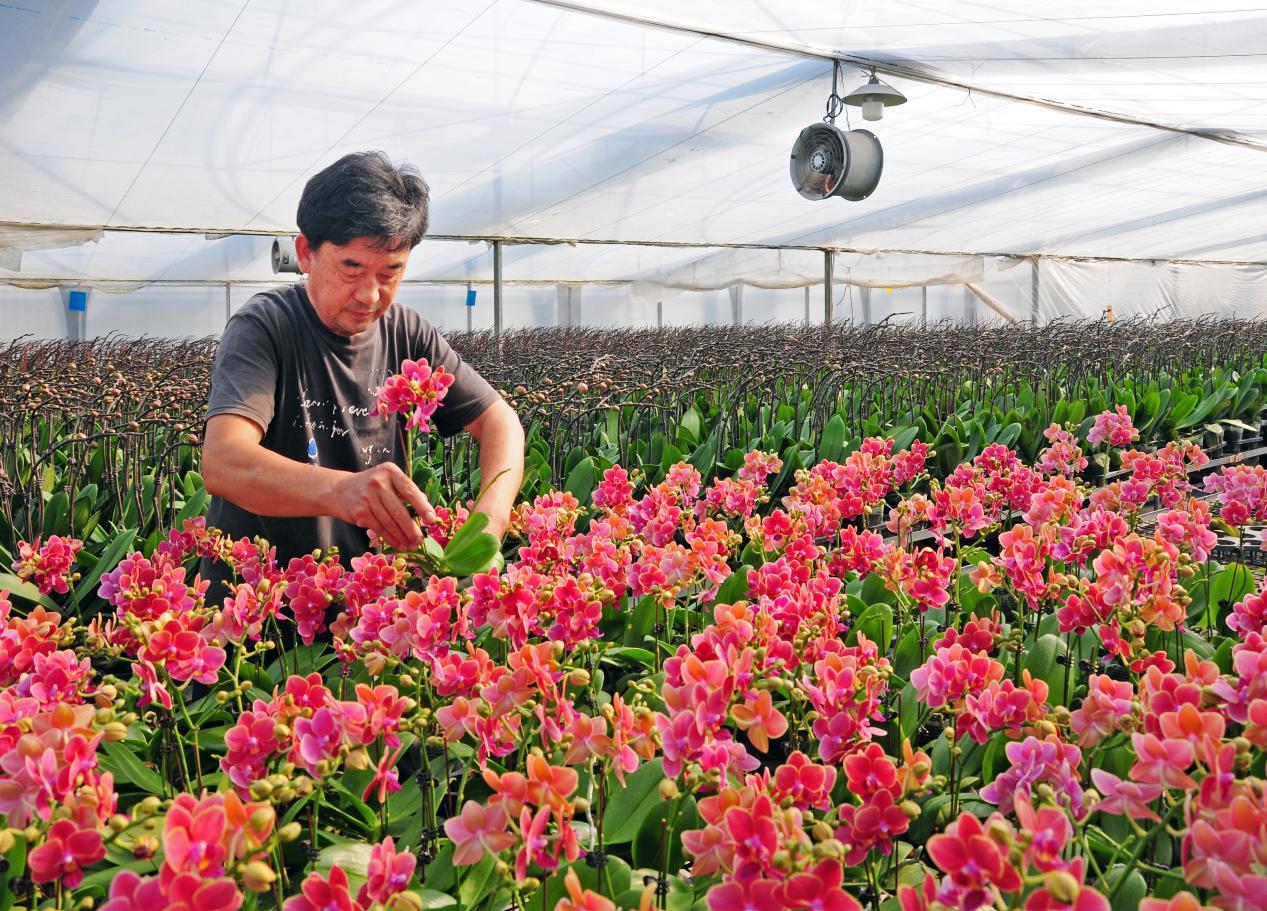 加快现代农业产业园建设 广州花都区花卉产业联合体暨花卉产业联盟成立