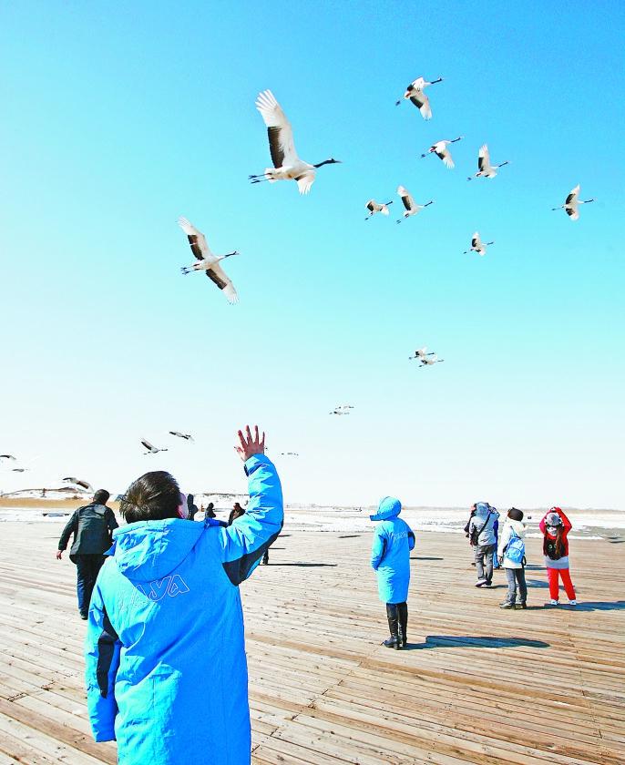 游客向高飞的丹顶鹤挥手。