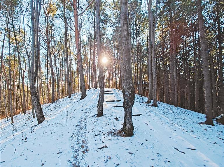 林间景致。