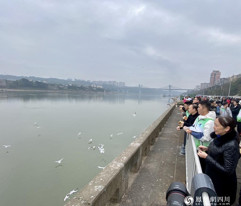泸州:保护红嘴鸥,志愿服务队你要不要加入?
