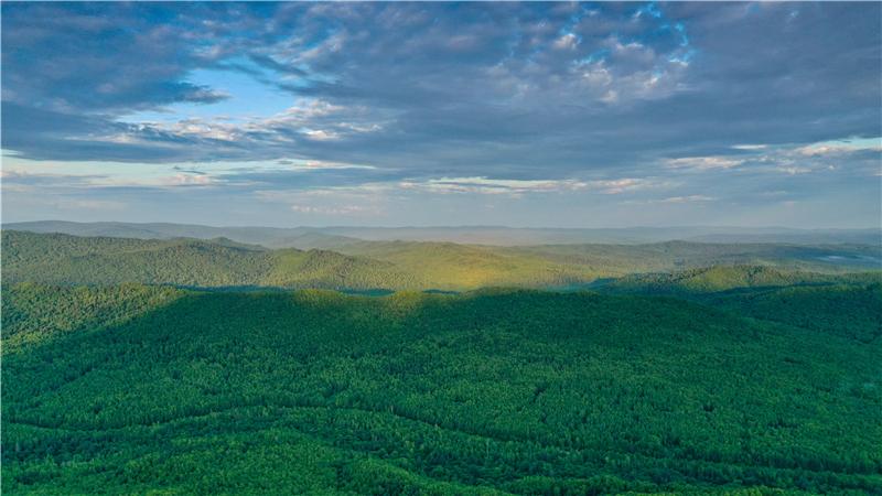 黑龙江省关注森林活动全面推进
