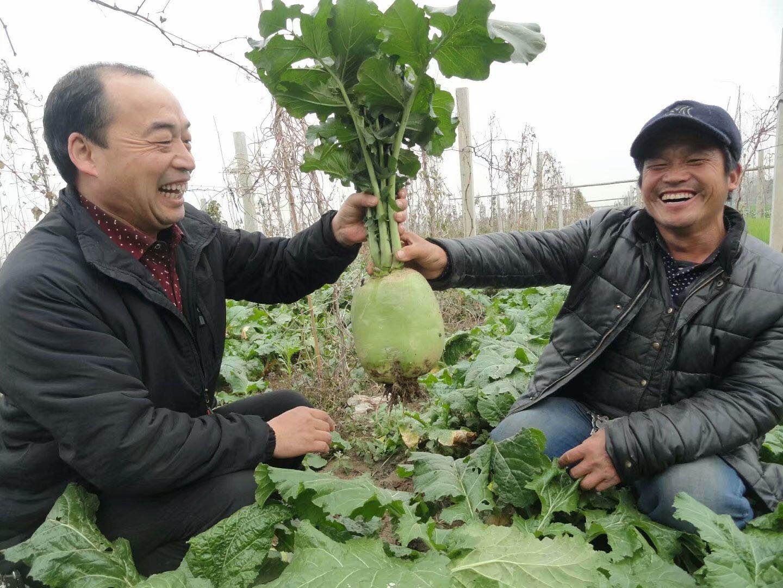 王新奇(左一)查看贫困村民种植的蔬菜长势(王曦健 摄)