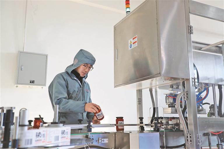 投资超千万元的兰西上百年食品科技有限公司落户林盛村,这是辣白菜生产线正在进行订单生产。 董新英摄