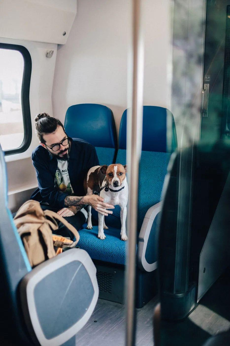 △带宠物的旅客/unsplash