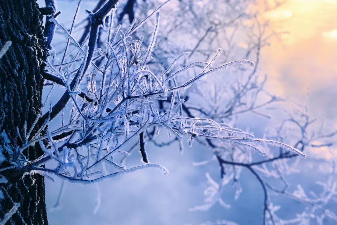 ▲ 吉林省吉林市,各种形态的雾凇打造出一片冰雪秘境。图1摄影/于永乐 图2摄影/卢文