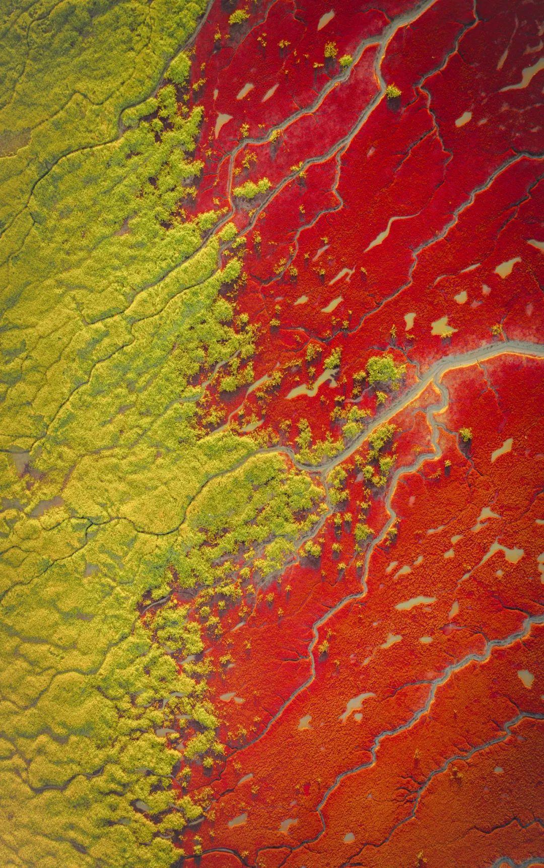 ▲ 盘锦红海滩,如同大地铺上的红毯。摄影/王禹