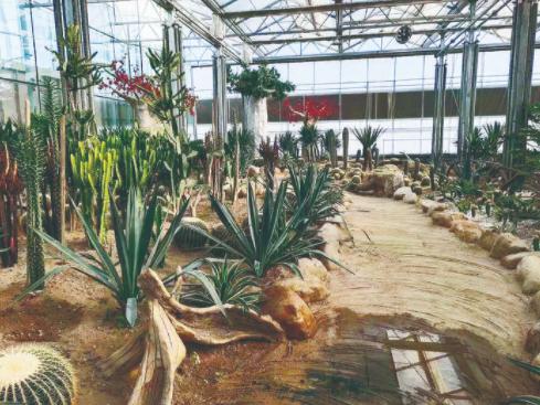 走进农安县合隆镇陈家店村的智能温室,扑面而来的是一股热浪,热带水果长势喜人。