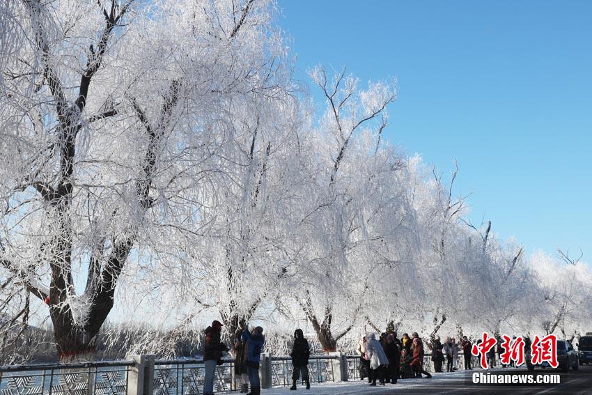 松花江岸现新年雾凇。苍雁 摄