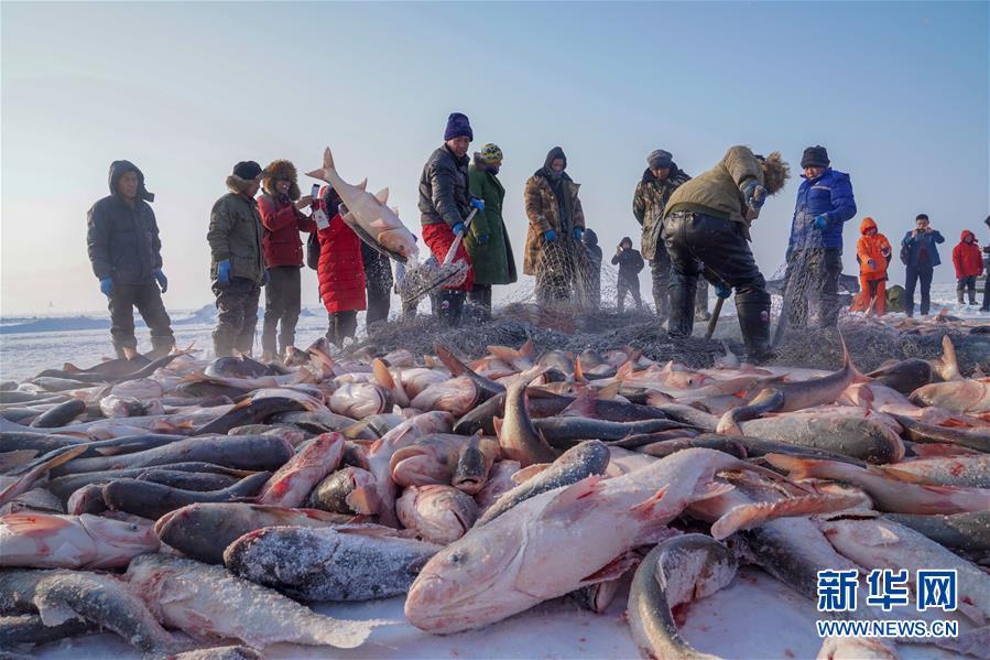 12月27日,在查干湖冰面上,游客手捧刚打捞上来的大鱼拍照留念。新华社记者 张楠 摄