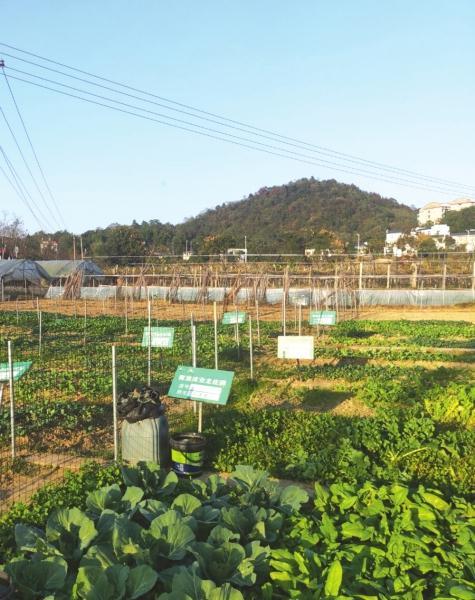 株洲青龙湾田园国际小镇,供业主种菜的农庄。