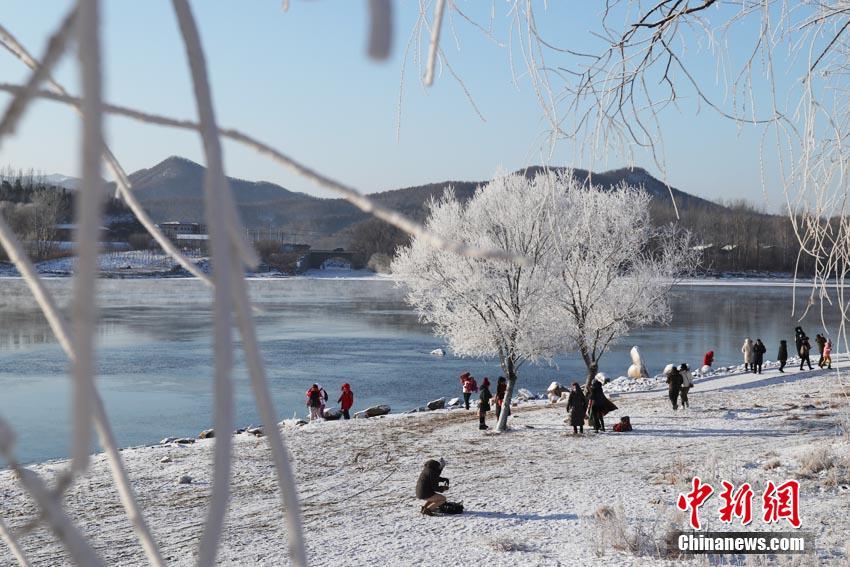 """1月3日,素有""""中国雾凇之都""""之称的吉林市迎来2021年新年雾凇。松花江岸雾凇凝结于枝,繁茂纯净,当地""""小雾凇岛""""游客如织。苍雁 摄"""