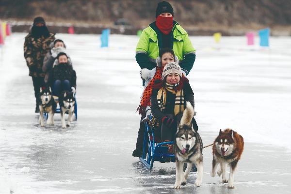 极具北欧风情的狗拉雪橇。