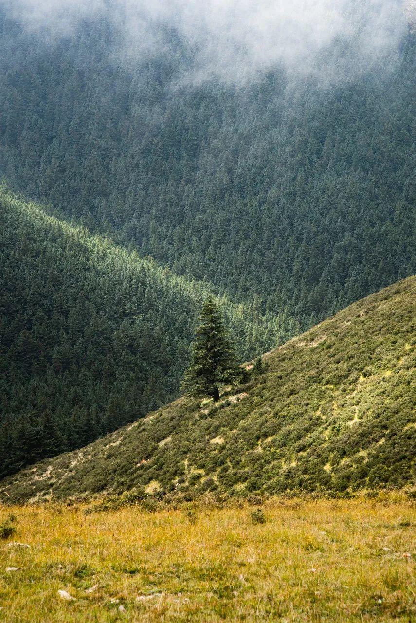 △有东部的贺兰山草木葱郁,把腾格里的风沙严严实实地挡在了西边/图虫创意