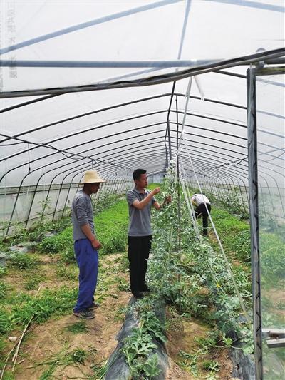 为村民进行病虫害防治技术指导。
