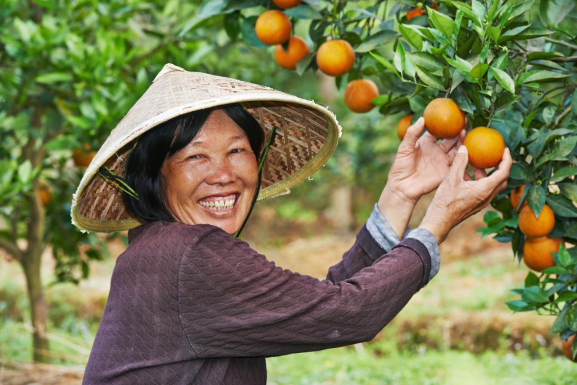 """推动秭归脐橙直通全国 美团优选""""农鲜直采""""助力乡村振兴"""