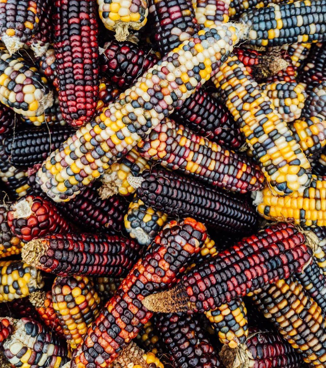 △五颜六色的玉米 / unsplash