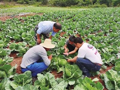 在田间面对面传授蔬菜种植技术。