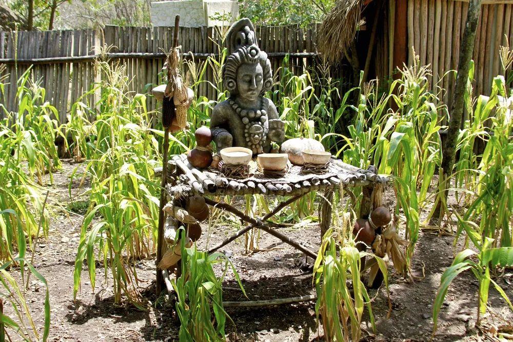 △玛雅的丰收祭在玉米地中举行 / 图虫创意