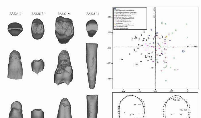 梅铺古人类牙齿齿质表面结构和齿冠轮廓形状的几何形态测量。邢松 供图