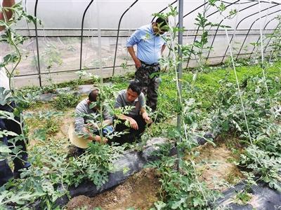 正在进行种植技术培训。