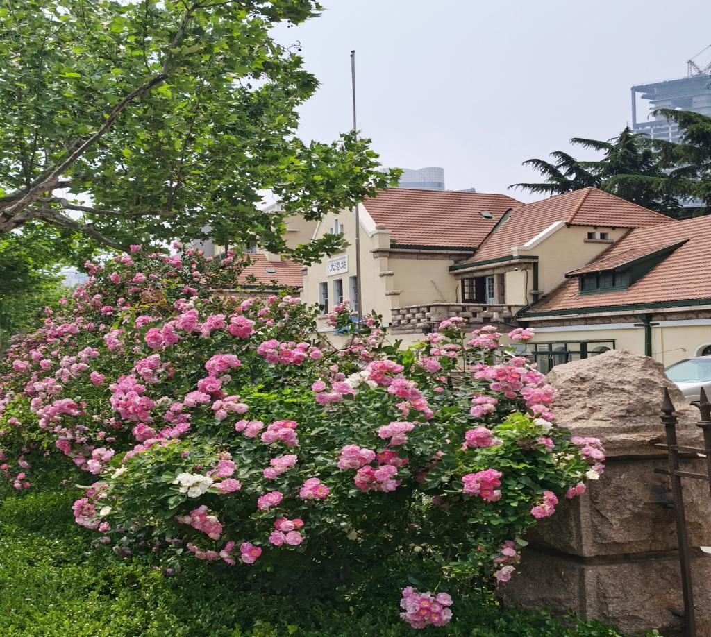 """""""历史名片""""焕新生 """"建""""证RCEP下市北的开放发展"""