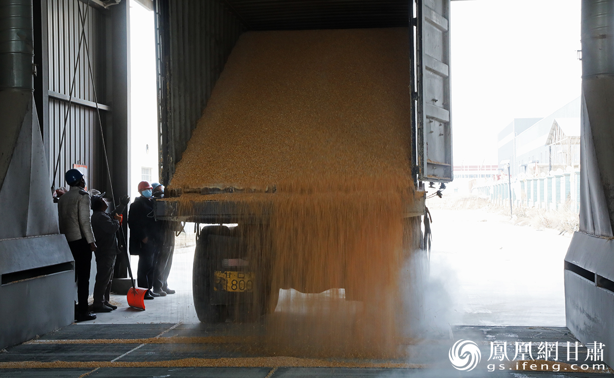 首批乌克兰玉米开箱 兰州新区商投集团供图
