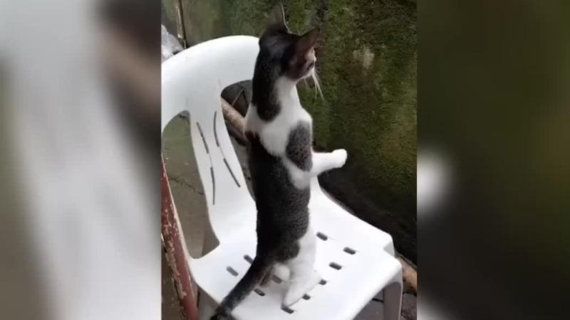 看热闹的标准姿势!小猫双腿撑地 全神贯注围观吵架