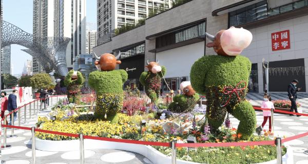 深圳市近3200个迎春花购花档开市 品种丰富多样