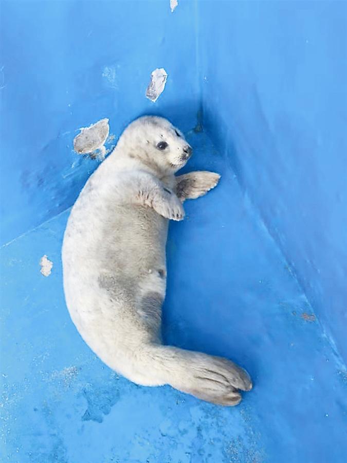 辽东湾斑海豹,是这样的小可爱_fororder_5