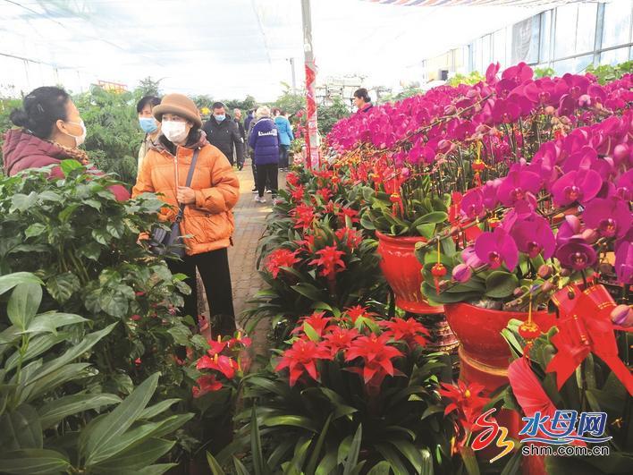 春节将至,烟台花卉市 场迎销售旺季凤凰网山东