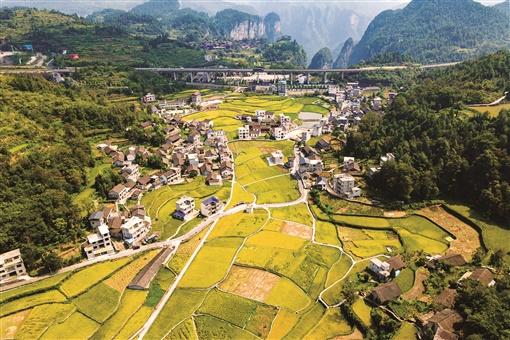 2020年8月29日,吉首市矮寨镇排兄村,稻田金黄。 刘振军 摄
