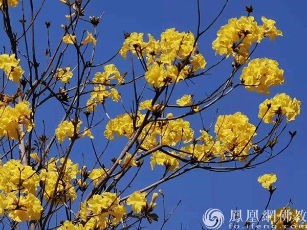 图片来源:凤凰网佛教 摄影:张晓丽