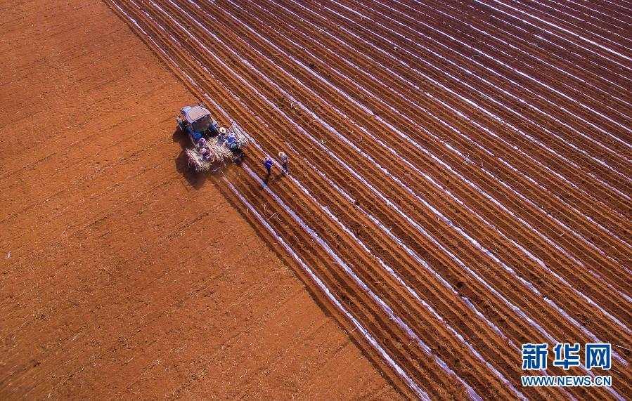 这是1月28日在广东湛江拍摄的耕作画面(无人机照片)。新华社发